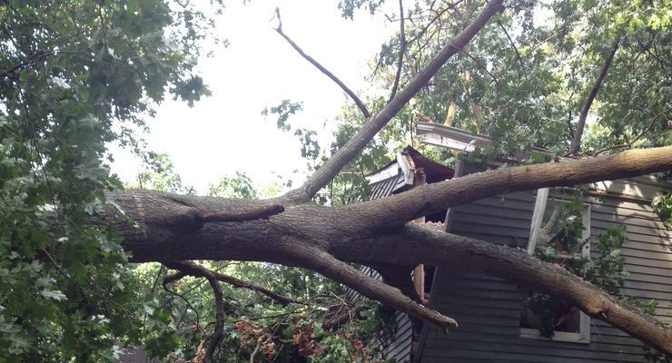 Emergency tree removal services in conyers lithonia