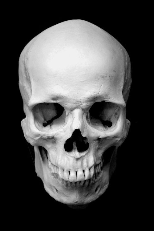 human skull - plaster anatomical reference cast by philippe faraut, Human Body