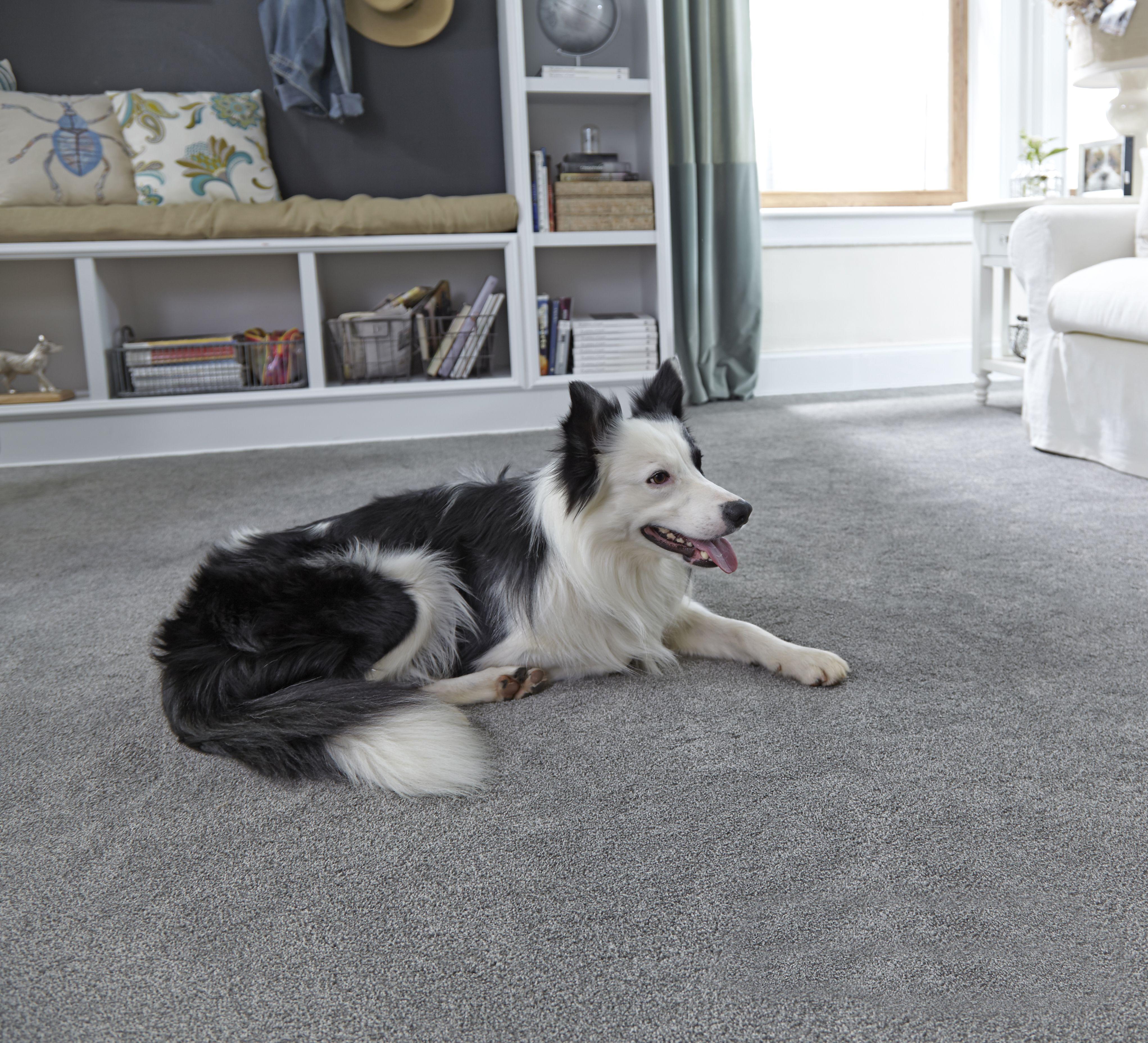 San Diego Carpets, Hardwood Flooring And More