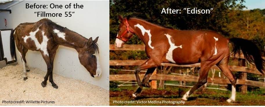 The Minnesota Hay Bank Provides Regular Feed Assistance To Mnharf And Did So For This And The Other Neglected Fillmore Horses Horses
