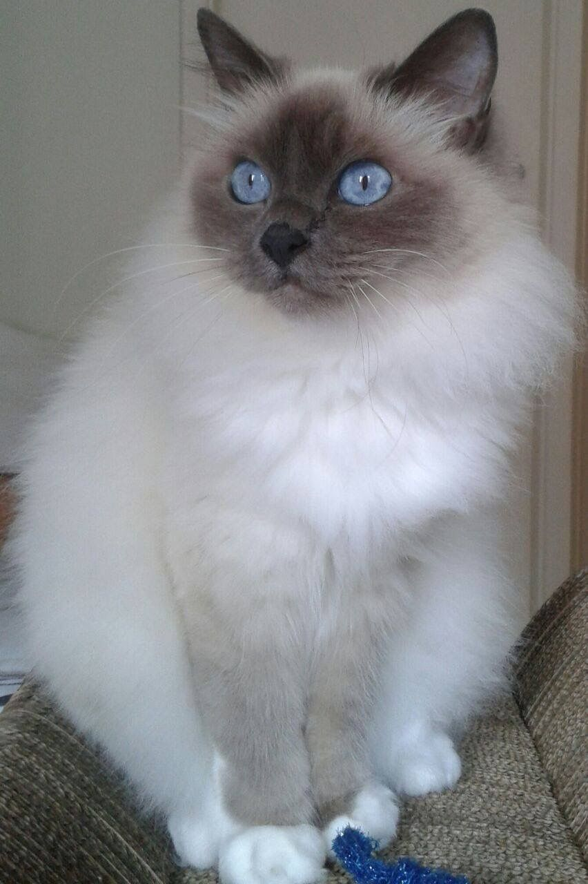 Splendid Cats And Kittens Animal Pictures Animal Lover