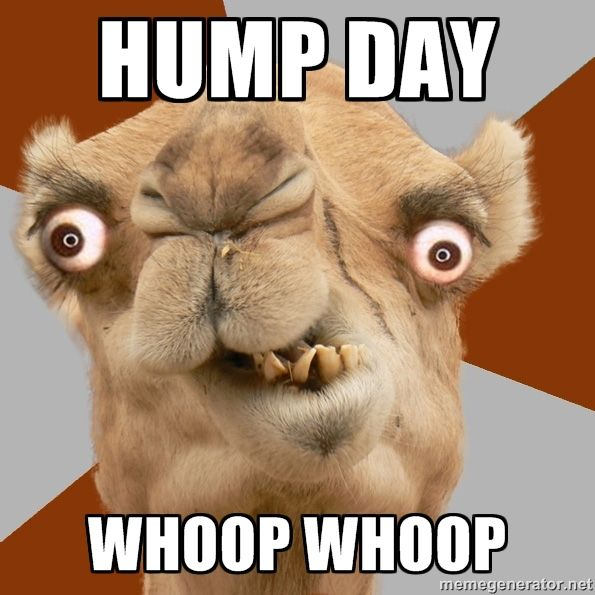 Funny Hump Day Quotes: Hump Day Camel, Hump