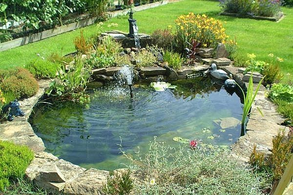 backyard pond water features
