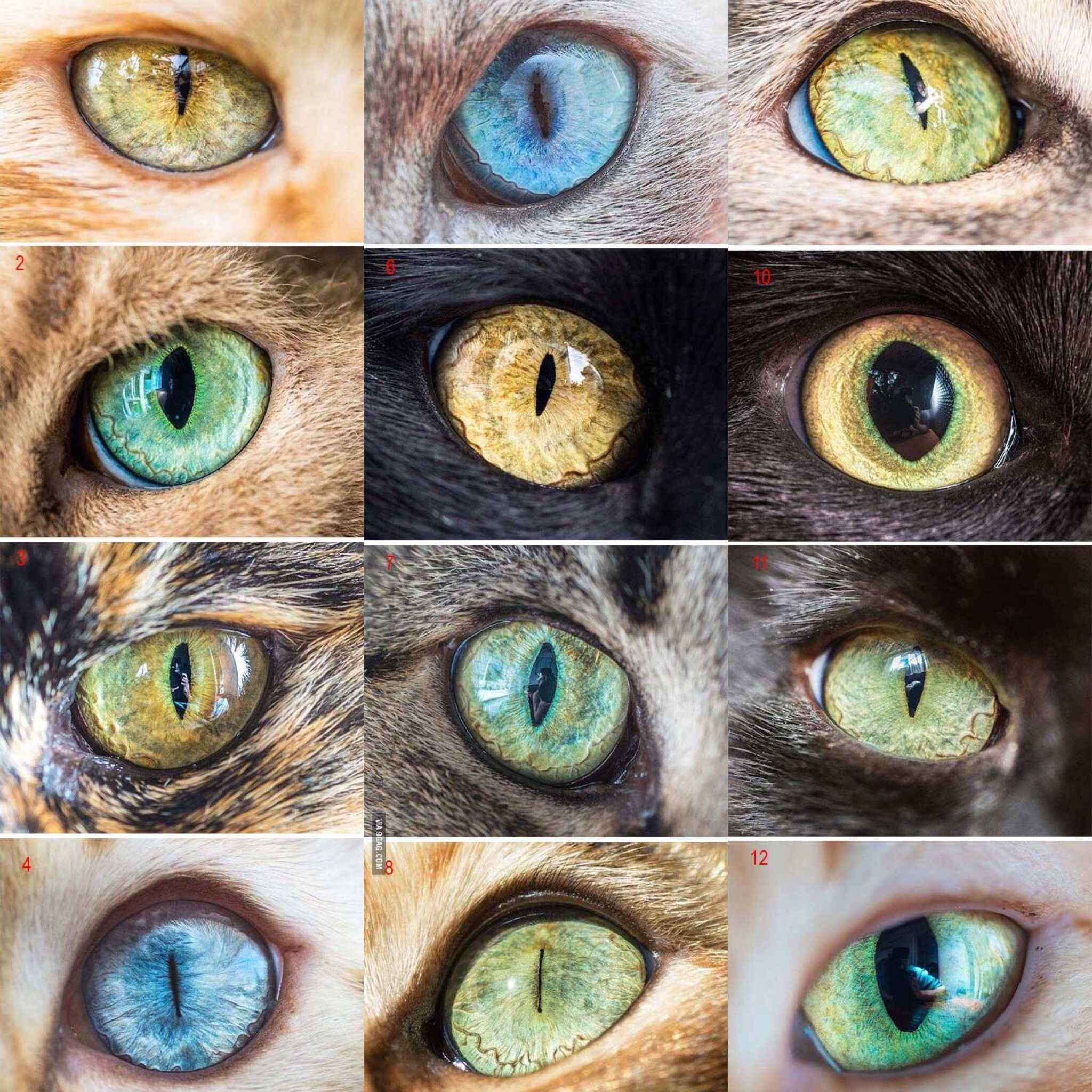 Eye Photography, Watercolor