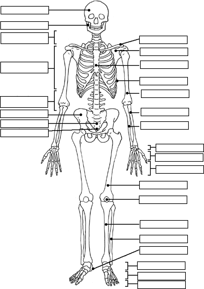 Skeleton Fill In The Names Anatomy And Physiology Anatomy Coloring Book Skeletal System Worksheet