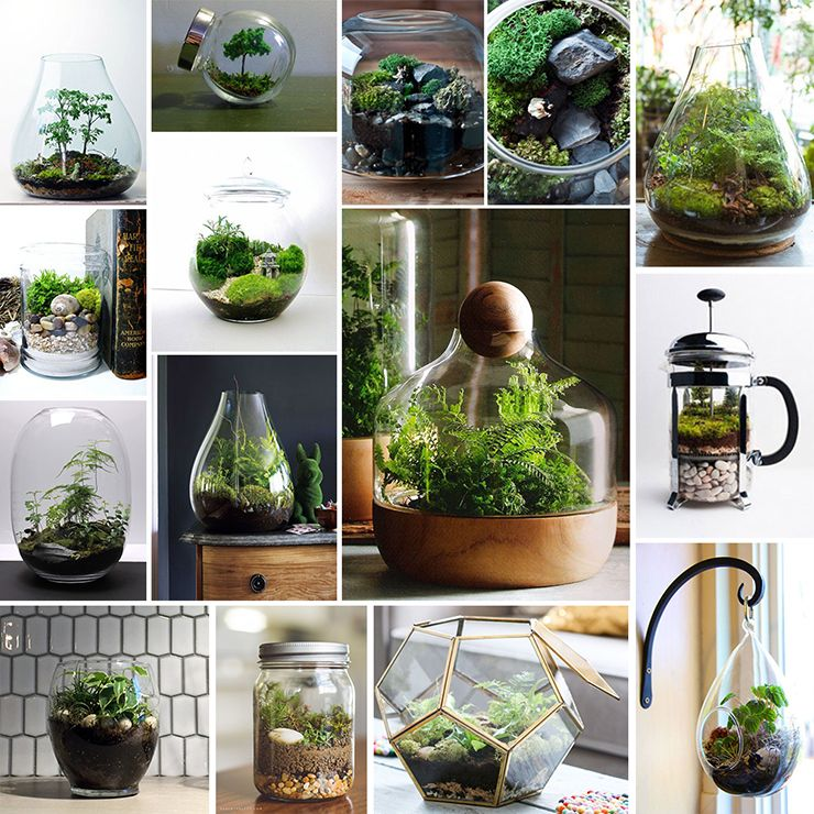 Enclosed Terrariums Tips Tricks And Inspiration Our Top