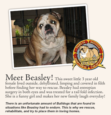 San Diego Bulldog Rescue Rescue And Adoption Services For English Bulldogs The Greater San Diego Area Bulldog Rescue Bulldog English Bulldog