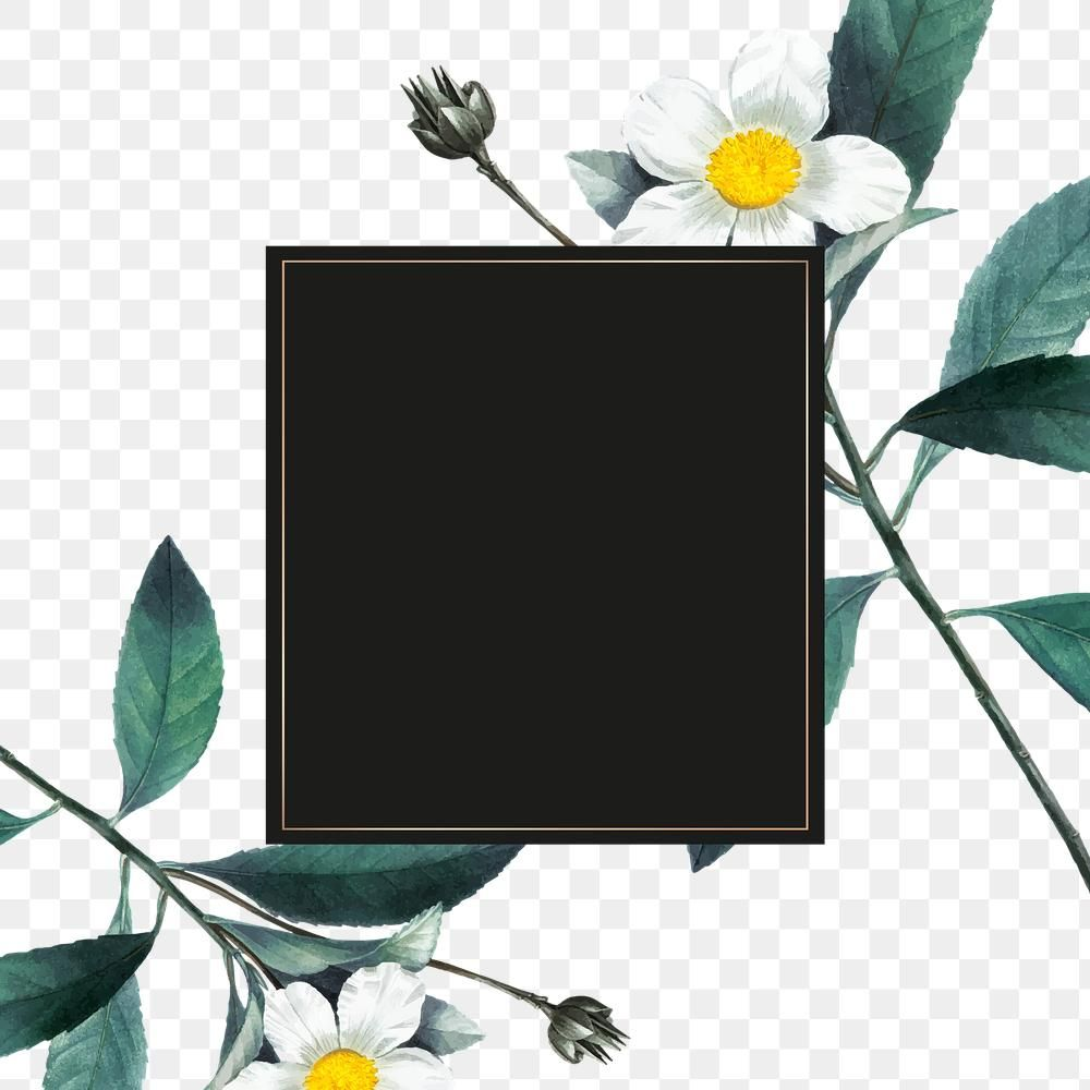 Download Premium Png Of Vintage White Flower Frame Png Hand Drawn Flower Frame Png Flower Frame White Flowers