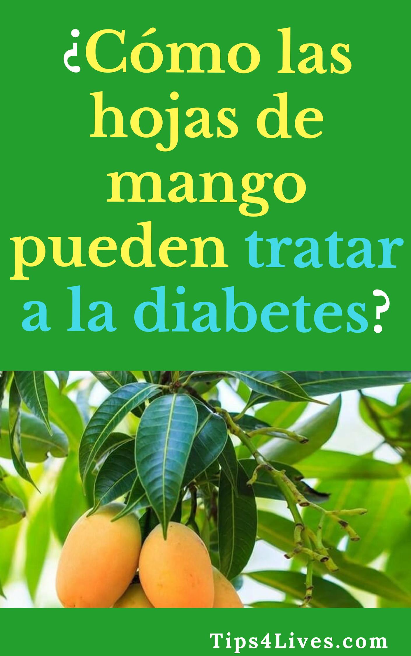 todo sobre las hojas de mango para la diabetes