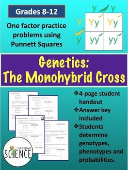 Monohybrid Cross Punnett Square Worksheet | Genetics ...