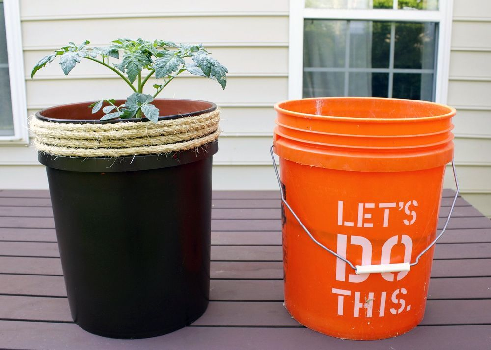 Growing Tomatoes In Five Gallon Buckets Growing Tomatoes 400 x 300
