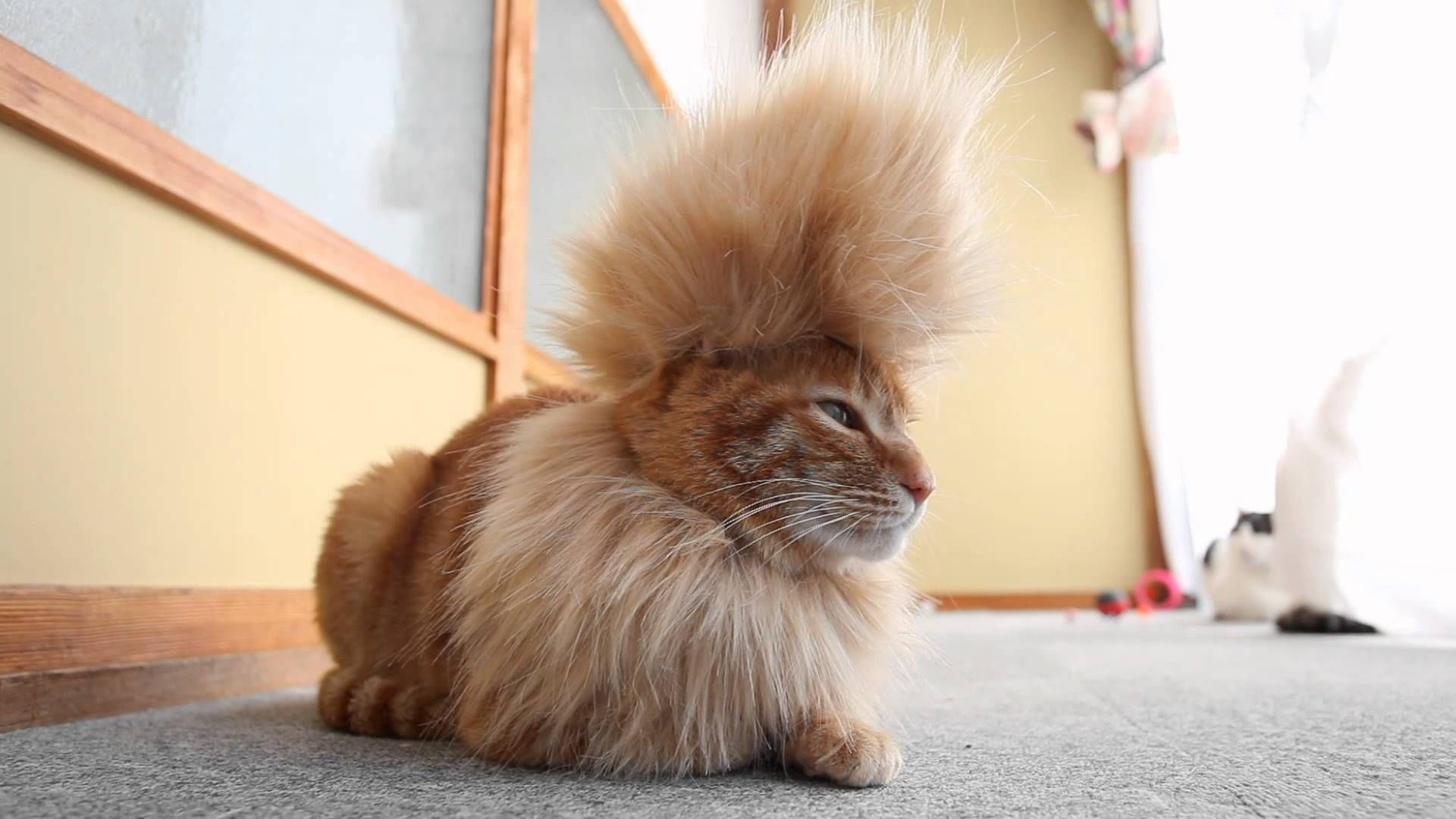 10 Pets That Are Having a Better Hair Day Than You.