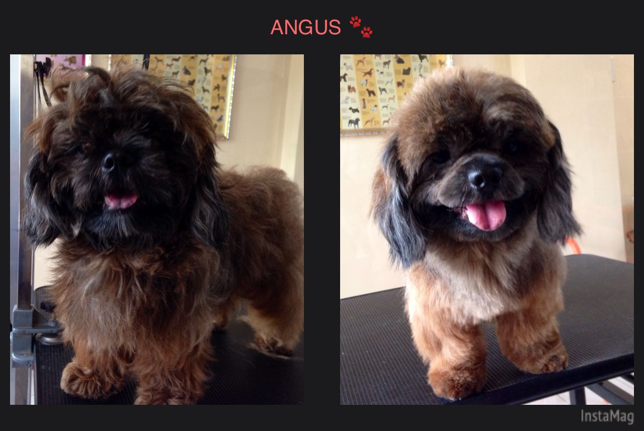 Before and after grooming shih tzu barkingbubbles