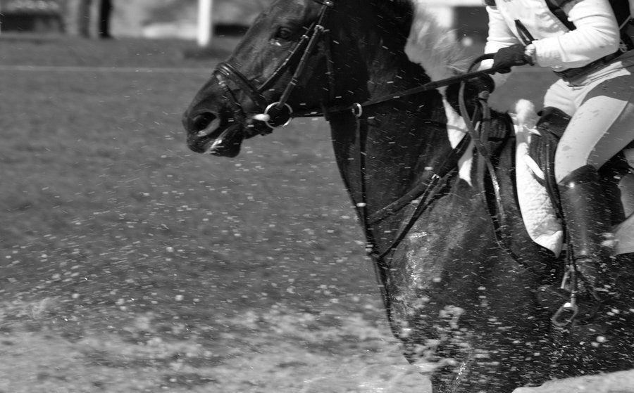 horse Trials 06 by mk-thommo on DeviantArt