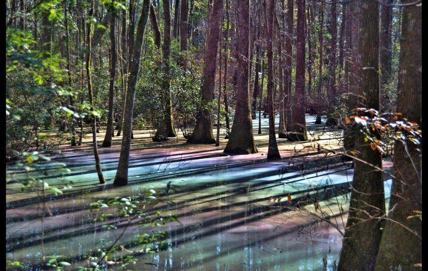 Psychedelic Swamp In Florida Displays Rainbow Colors Natural Phenomena Florida Travel Vacation Spots