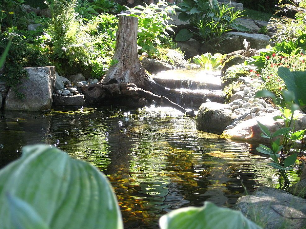 Nature Scapes Ecosystem Pond Transforms Yard Adding Curbside Appeal In Nh With Images Pond Plants Dyi Landscaping Ideas Scape