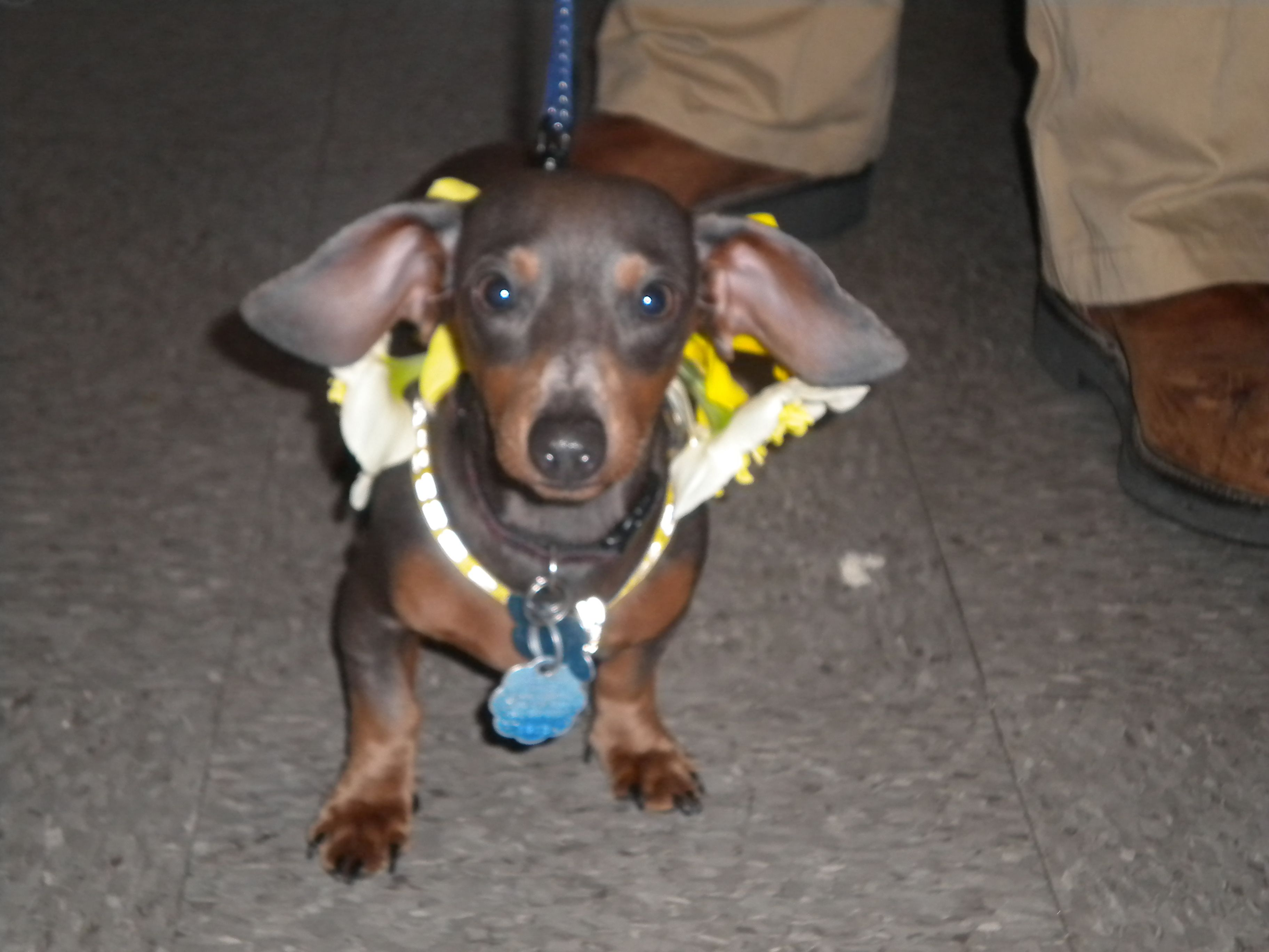 I'm a blue Dachshund who brought my mommy flowers . . .