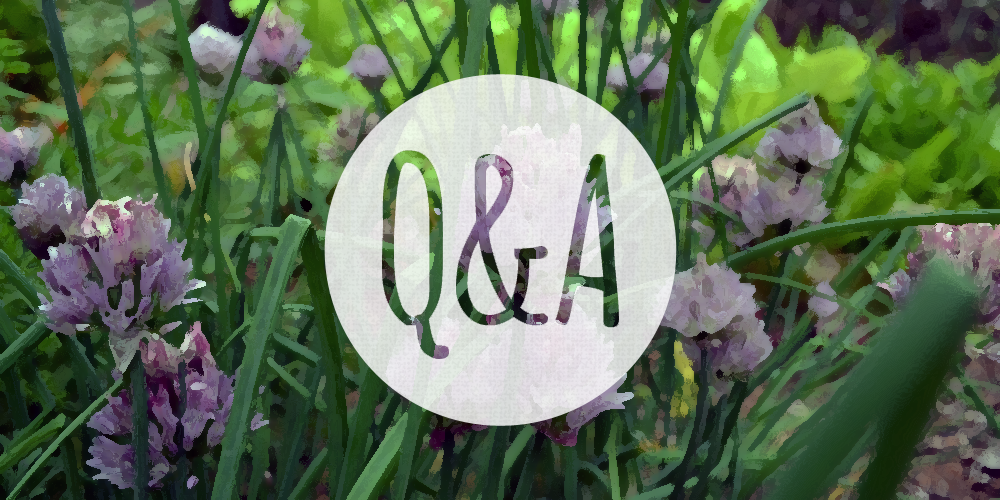 Q: Why did my cilantro plant die after it bloomed?