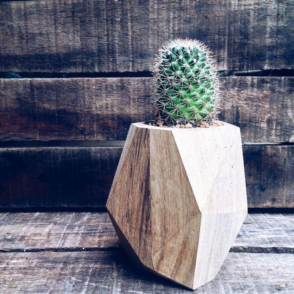 Macetas de madera facetadas con mix de cactus o suculentas - Macetas de madera ...
