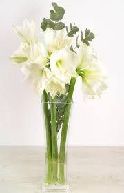 Bildergebnis Fur Amaryllis Weiss Floristik Pinterest Blumen