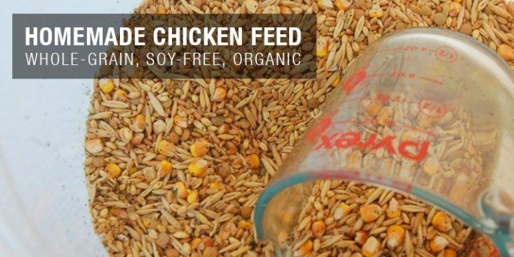 Organic Homemade Chicken Feed Recipe