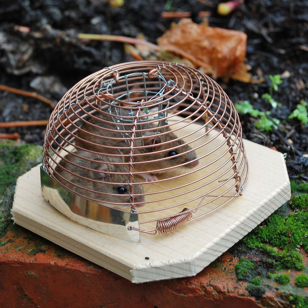 humane mouse trap for catching not killing mice i love design mouse traps killing mice. Black Bedroom Furniture Sets. Home Design Ideas