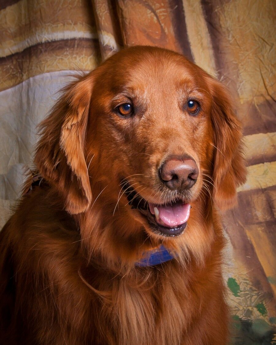 Redmond Glamour Shot Pet Valu Such A Beauty Dog Portraits