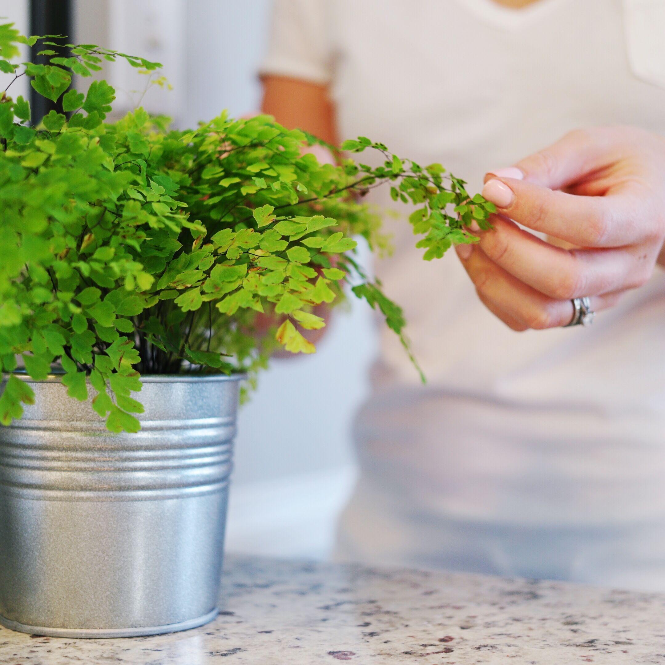 50 House Plants Safe For Cats Children | Cat safe plants ...