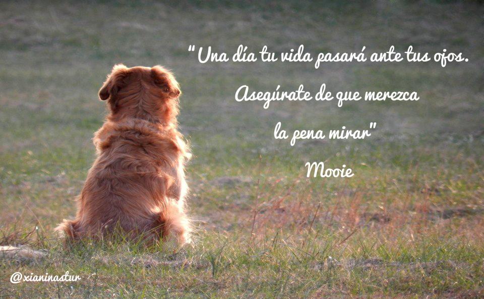 """""""Una día tu vida pasará ante tus ojos. Asegúrate de que merezca la pena mirar"""" - Mooie #FraseDelDia #Citas #Quotes"""