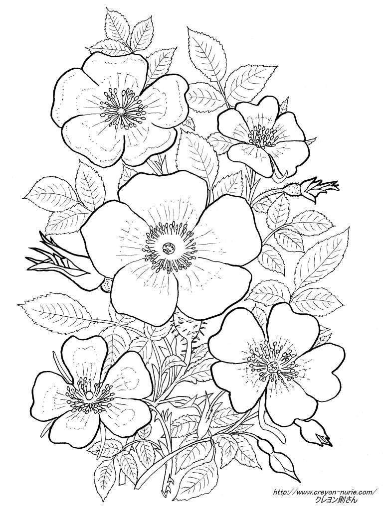 薔薇の植物画の塗り絵の下絵画像 рисувани цветя Flower Line