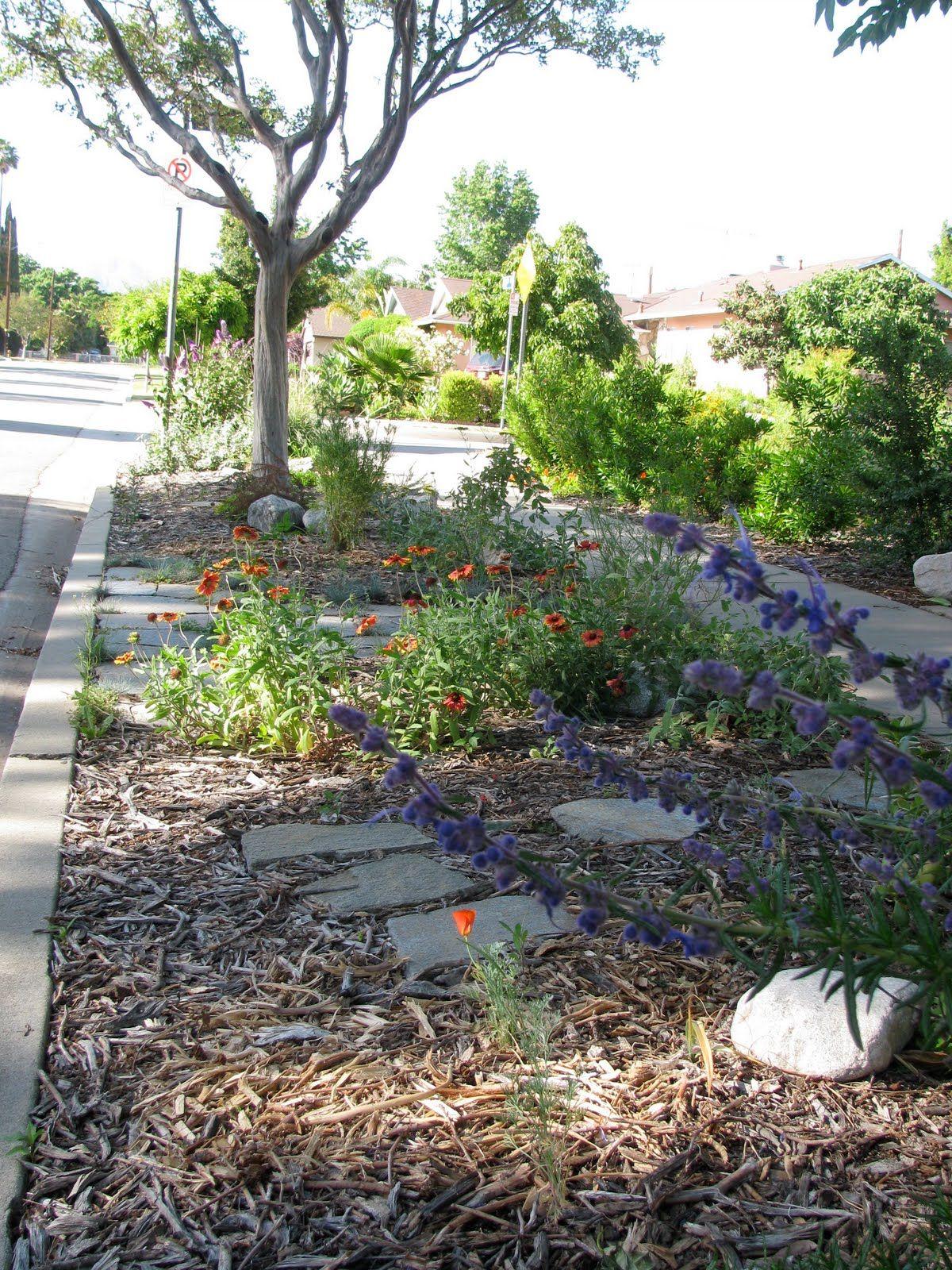 Elegant Drought tolerant Plants California
