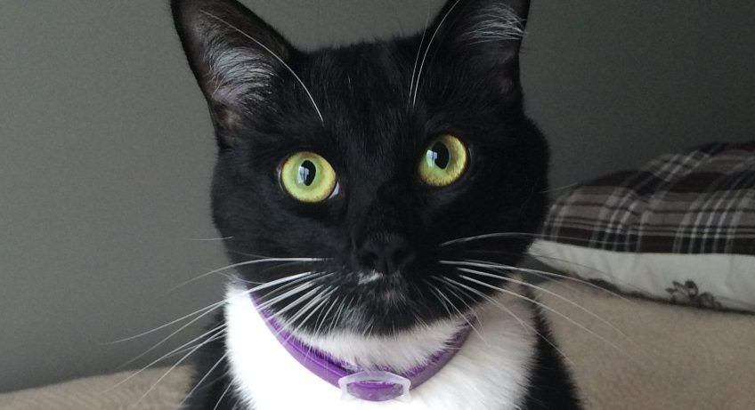 """Planned Pethood has helped thousands of cats from being put down at local shelters and also from an untimely death if they continue free roaming the Earth. They have a TNR program where they trap, spay/neuter and then re-release feral cats back in to their """"home"""", but they also find new homes for cats."""