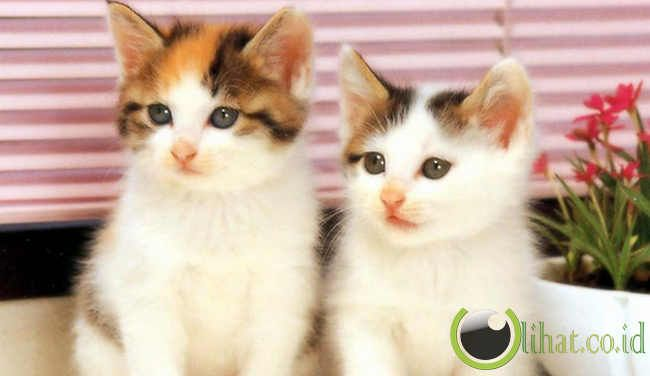 5 Keajaiban yang terdapat pada Tubuh Kucing