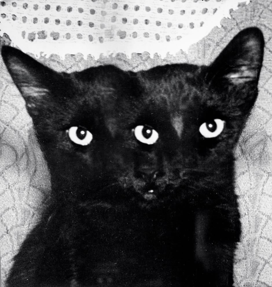 It s not Friday the 13th without reference to a black cat I love my