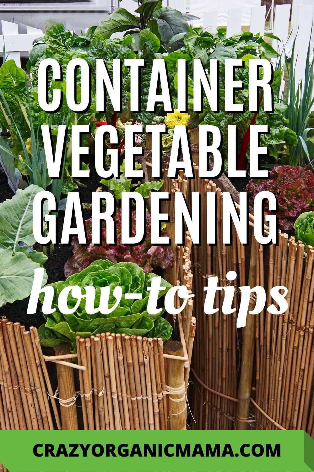 Grow A Vegetable Garden In Containers Container Gardening