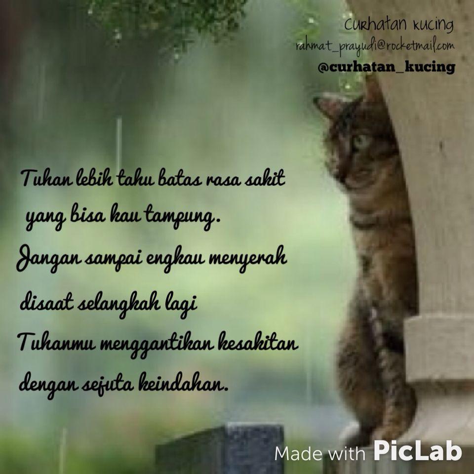 Curhatankucing Cat Quotes Galau Curhat Katakata Rahmatprayudi Kucing Rasa Sakit Menggambar Kucing