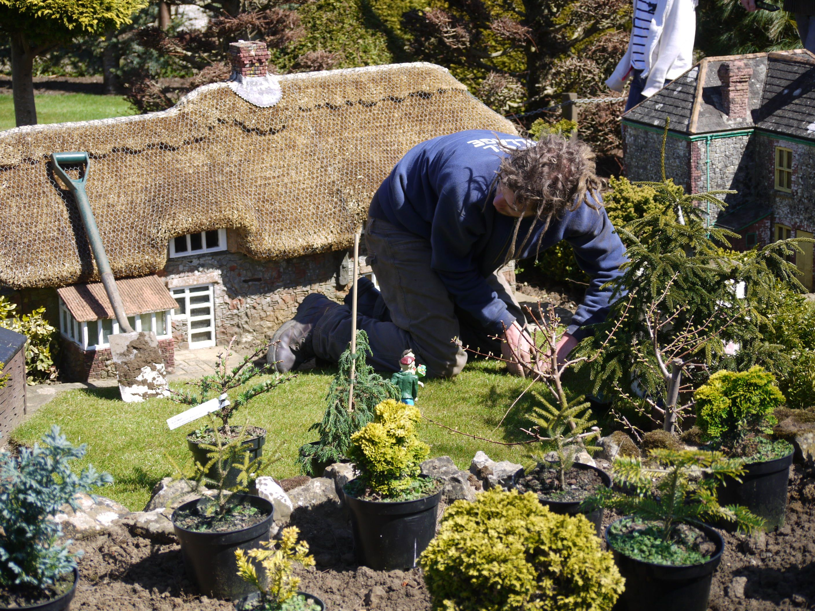 Getting the trees to the perfect scale for The Homestead garden.  The real thatched cottage can still be found in the High Street, Godshill, Isle of Wight.