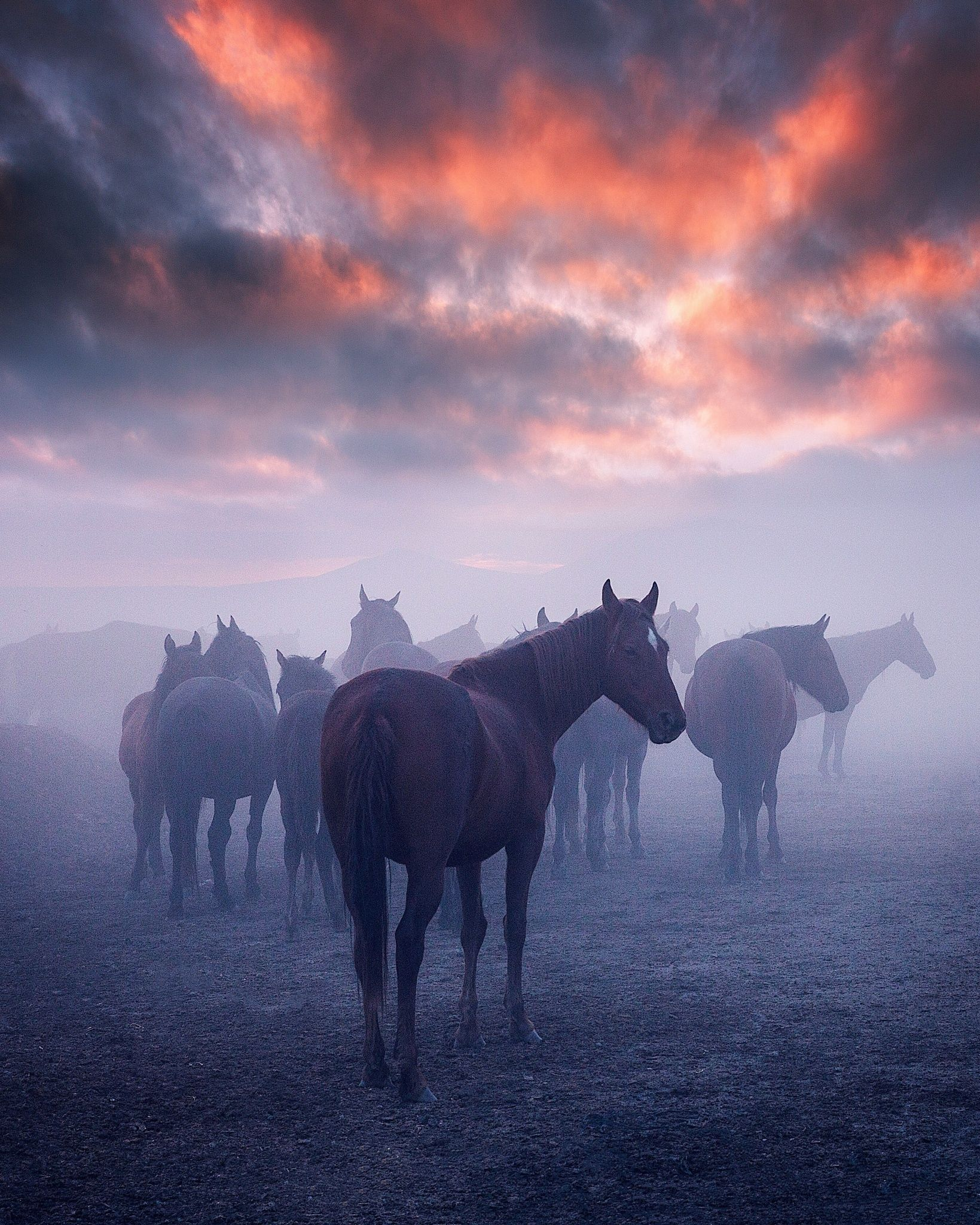 Mystical sunset and wild mustang - horses in the Erciyes Mountain region. -