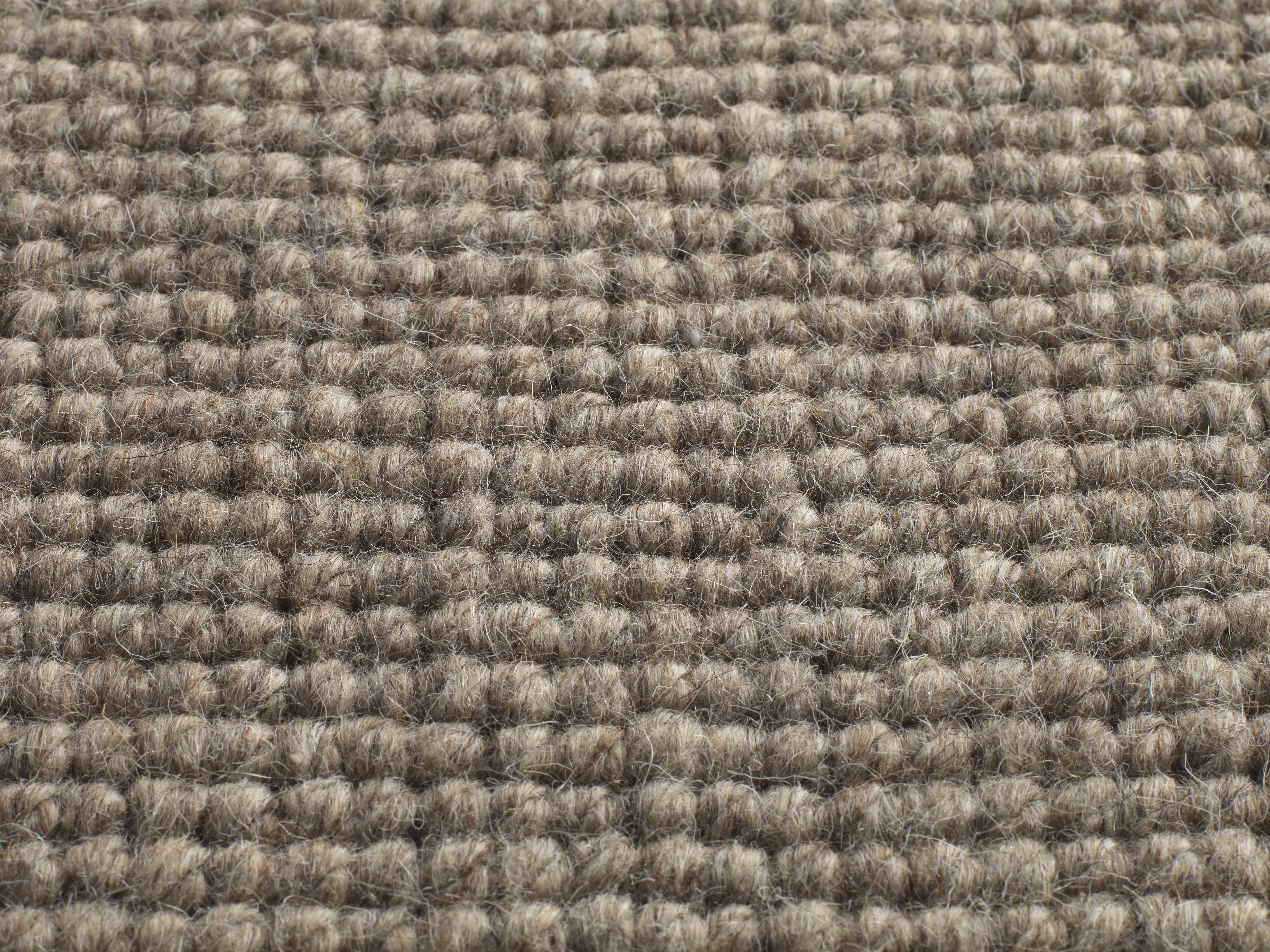 Jacaranda Carpets Chandigarh Oatmeal broadloom carpet 4 & 5 meter 100% undyed wool