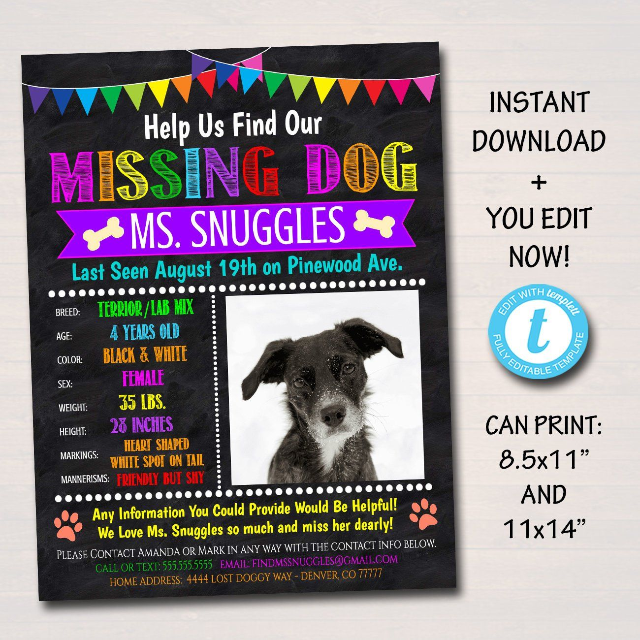 Editable Missing Dog Flyer And Poster Template Printable Lost Dog Pet Flyer Instant Download Colorful Bright Atten Poster Template Losing A Dog Losing A Pet Lost and found poster template