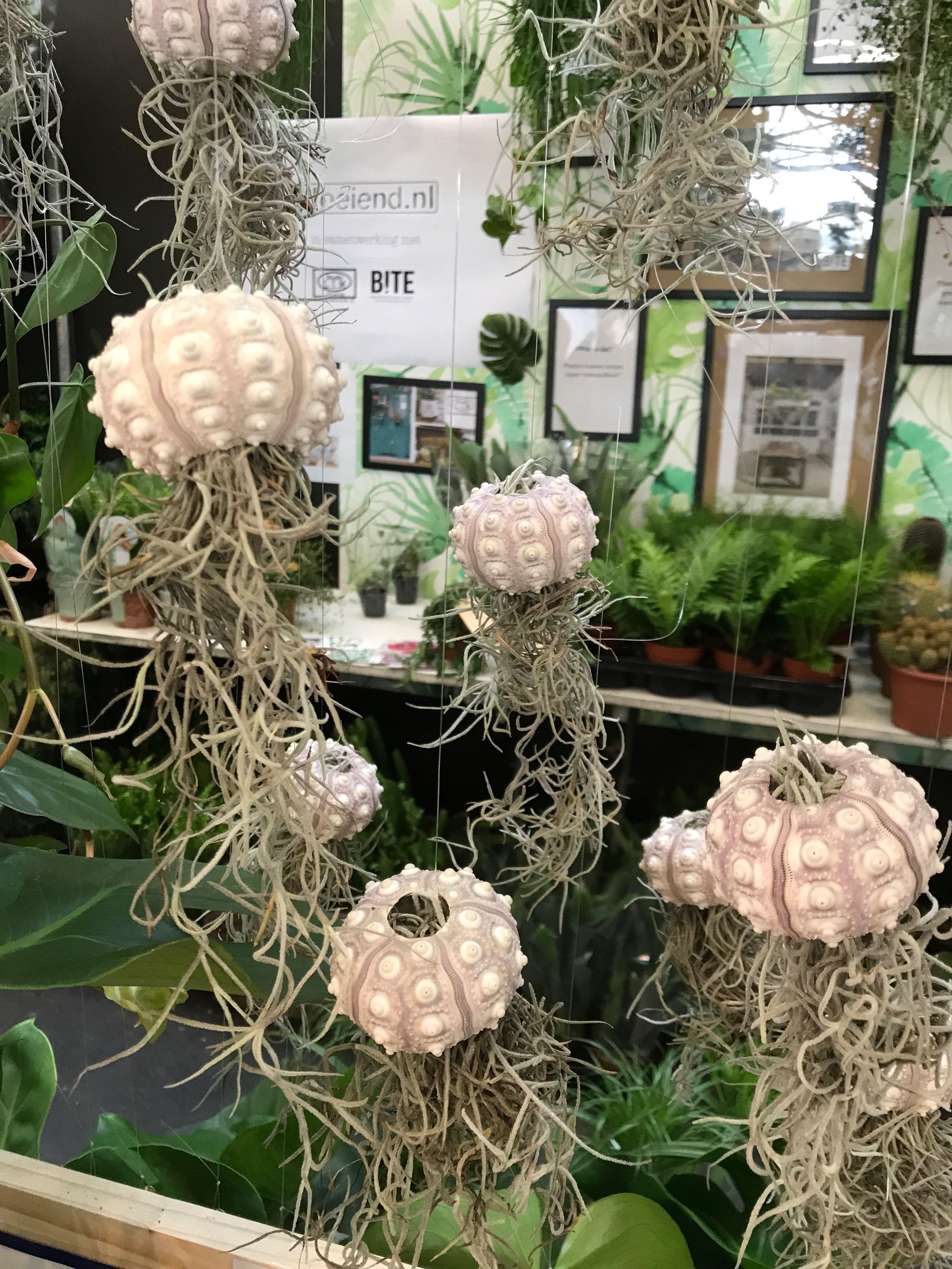 Airplants #eco #plant #green