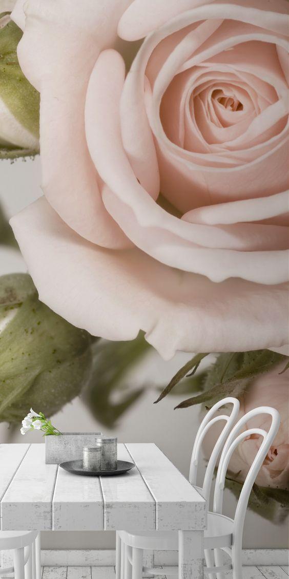 Elegant Pink Rose Wallpaper Mural Pink Rose Petals