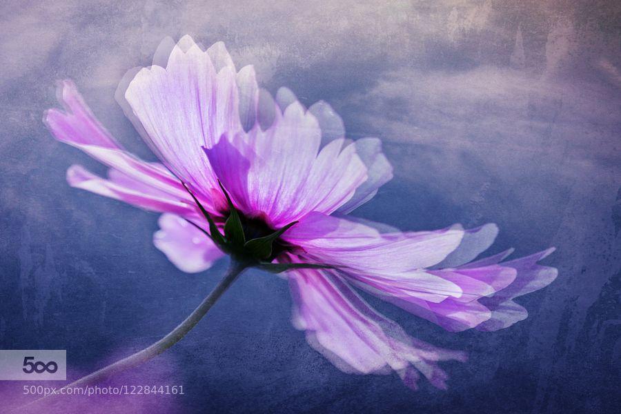 federleicht - Pinned by Mak Khalaf Fine Art BlumenBlütenNaturPflanzenleichtzart by chrellger