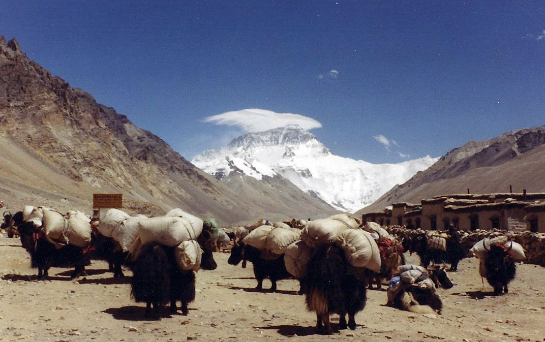Yak Caravan With Everest In The Background Tibet Asian Dragon China Painting Riding