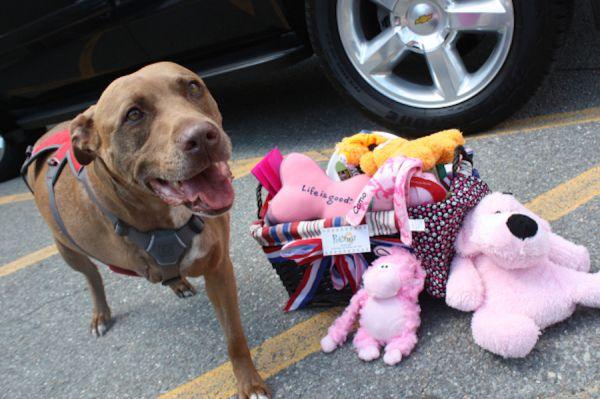 16 Perros que se convirtieron en héroes al salvar a su familia y sabes algo… son Pitbulls ⋮ Es la moda