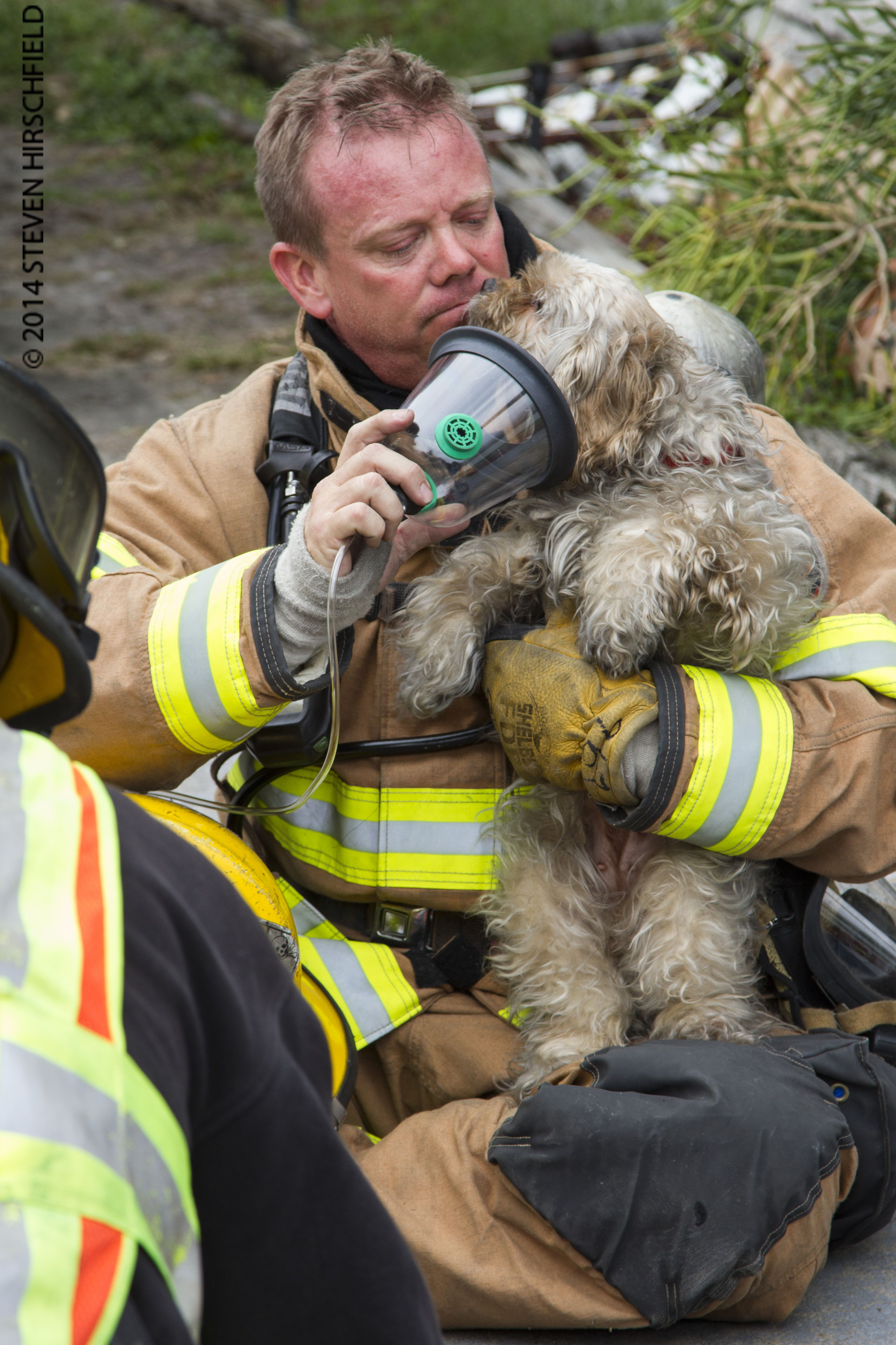 Firefighters And Animals