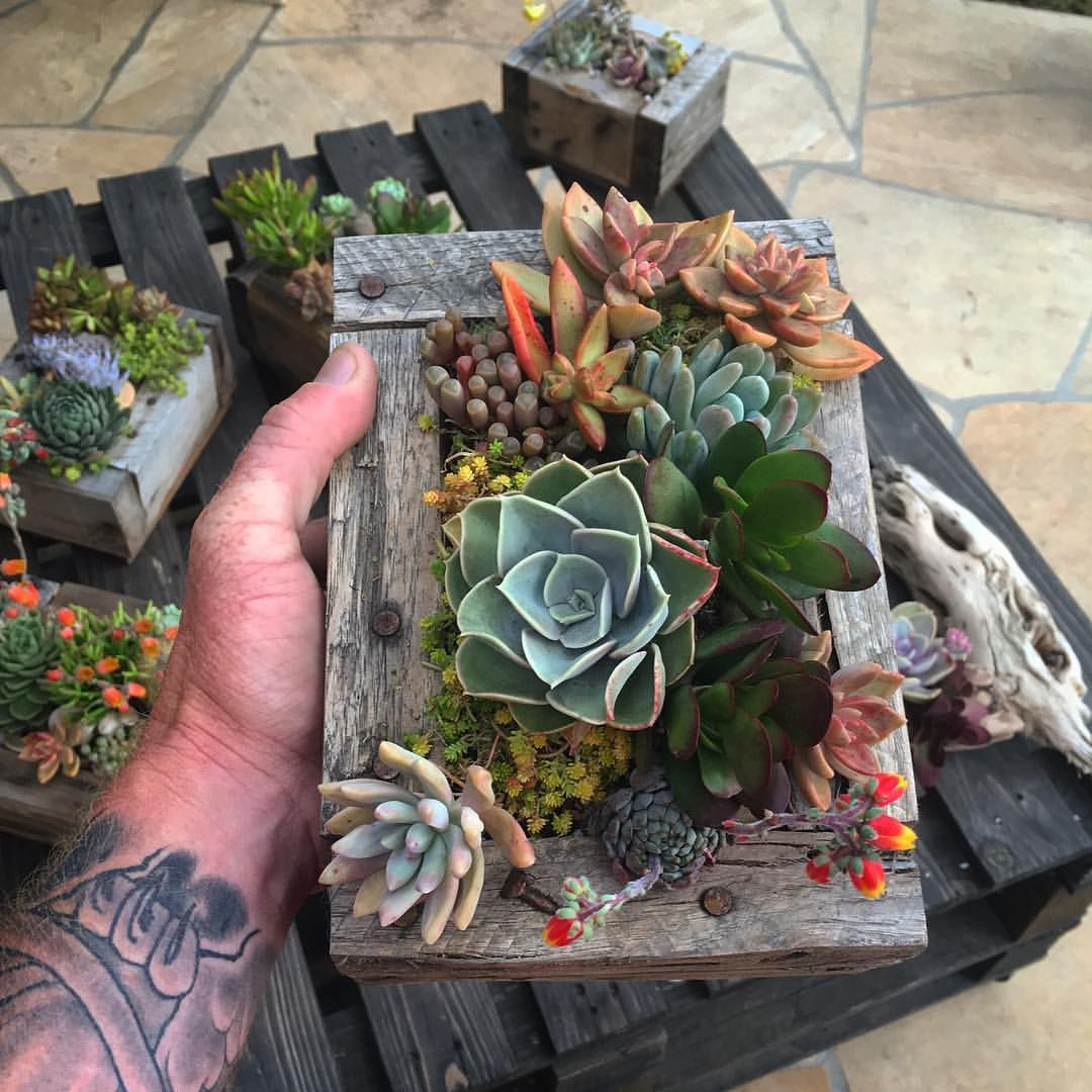 1 269 Synes Godt Om 12 Kommentarer Csg Succulents Csg Succulents Pa Instagram Had To Freshen Up This Piece Super H Succulents Instagram Posts Greenery