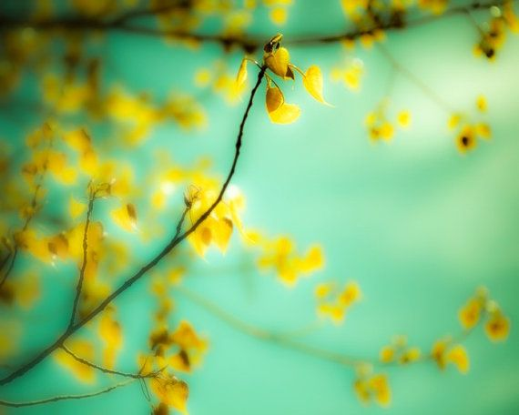 Canary yellow, tree photography, aqua, pastel tones, pale turquoise, gold, blue green Tree Photo - Dream a Little Dream 8x10 - BOGO