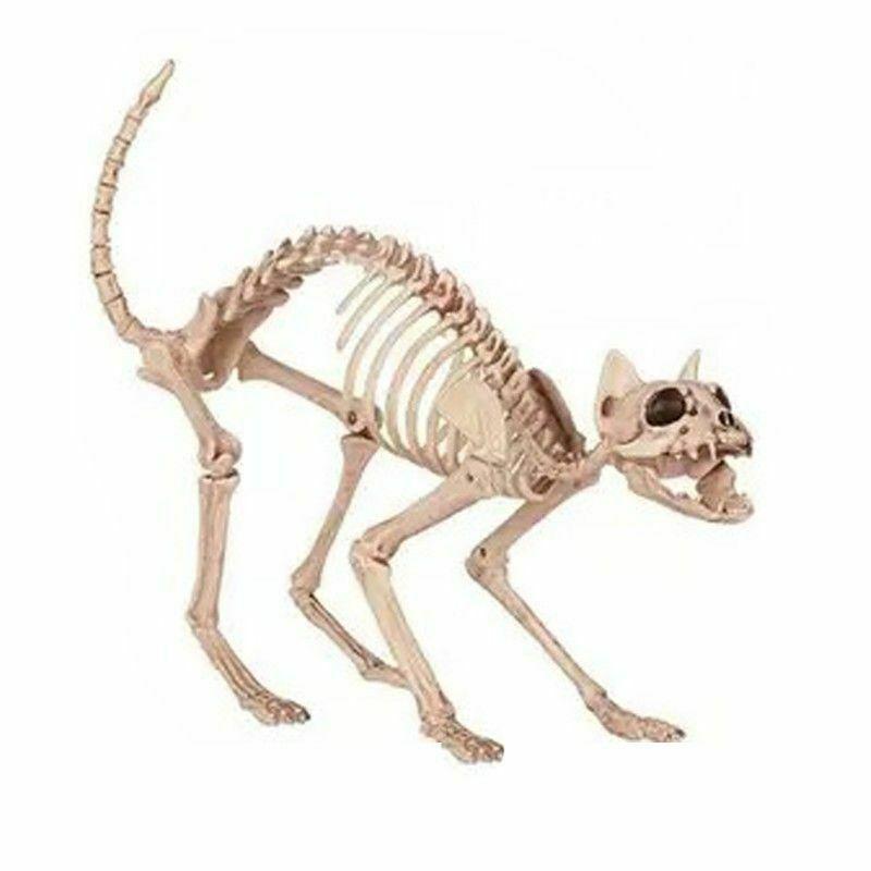 Plastic Skeleton Cat Animal Skeleton Bones Scary Halloween Home Decoration Cat Animal Plastic Cat Skeleton Plastic Animals Animal Skeletons