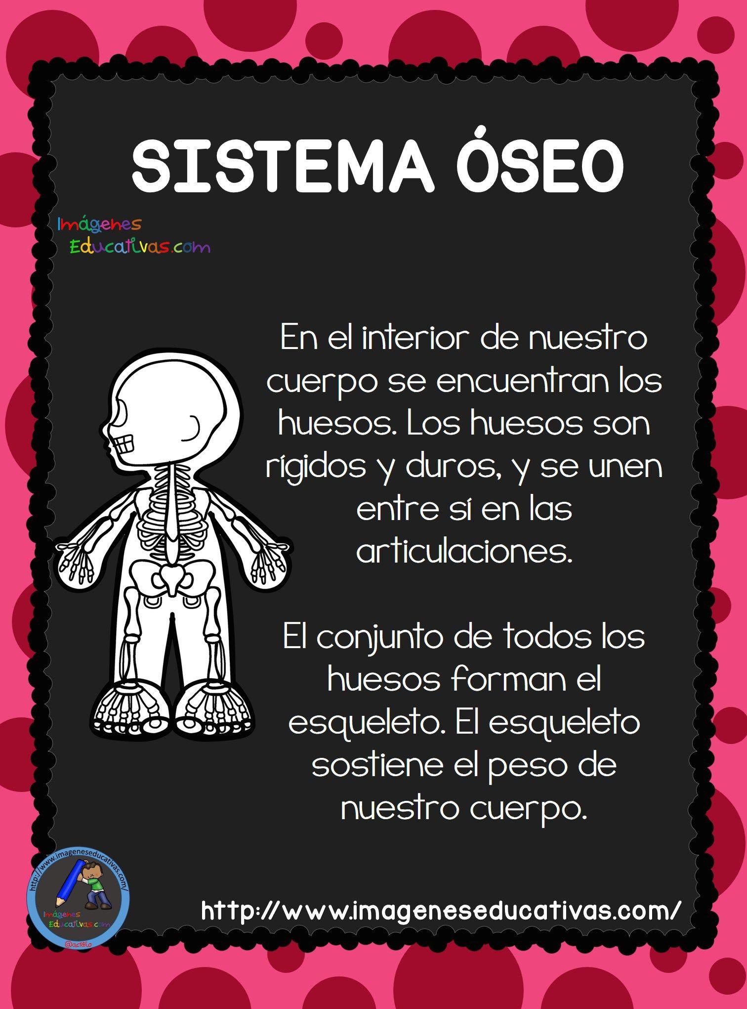 El Cuerpo Humano; Aparatos y Sistemas para Primaria Un ser vivo ...